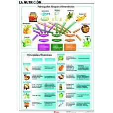 LAMINA ANATOMIA NUTRICION/EL CUERPO HUMANO